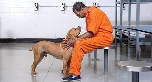 Prison Animal Programs